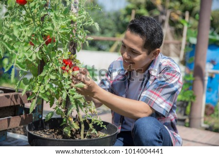man looking at the tomato he once grew in his farm #1014004441