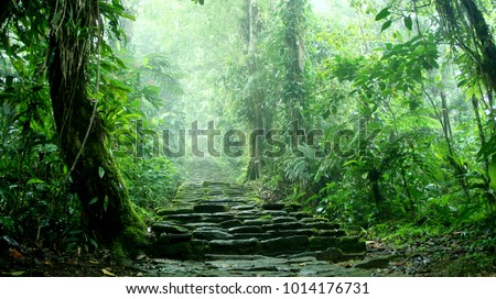 Hidden staircase deep in the Colombian Jungle belonging to the ruins of Ciudad Perdida  Royalty-Free Stock Photo #1014176731