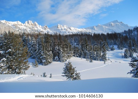 Ski tracks through the backcountry of the Absaroka Mountains of Wyoming in January. #1014606130