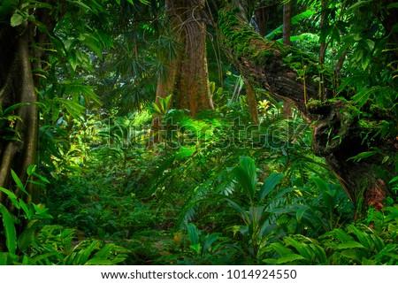 Asian rainforest jungle #1014924550
