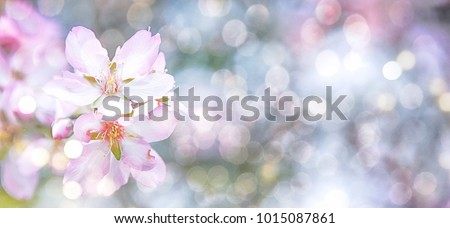 Almond blossoms over blurred nature background #1015087861