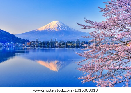 Lake Kawaguchiko, where Mt. Fuji and cherry blossoms bloom, is a typical landscape of spring in Japan. #1015303813