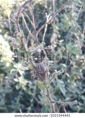 Sleeping Spider close up shots #1015344445