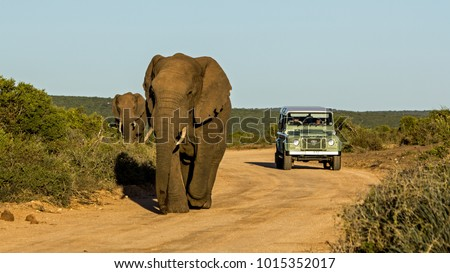 Taken in Addo National Park, South Africa Royalty-Free Stock Photo #1015352017