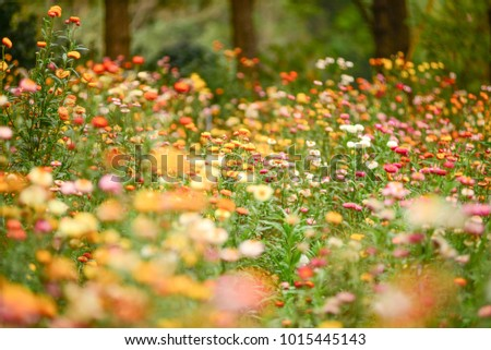Flower under sunlight, blurred background and bright meadow brighten the morning. #1015445143
