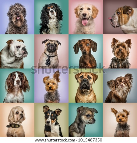 Composition of dogs against colored backgrounds #1015487350