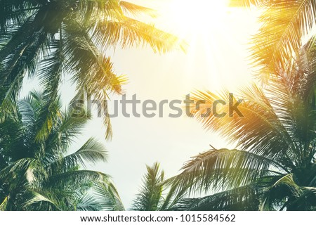 Copy space of silhouette tropical palm tree with sun light on sunset sky and cloud abstract background. Summer vacation and nature travel adventure concept. Vintage tone filter effect color style. #1015584562