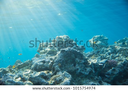 Sea, coral and fish. coral under water. The sun's rays shine on the coral #1015754974