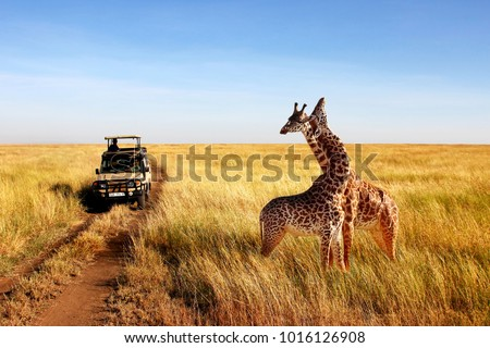 Wild giraffes in african savannah. Tanzania. National park Serengeti. #1016126908