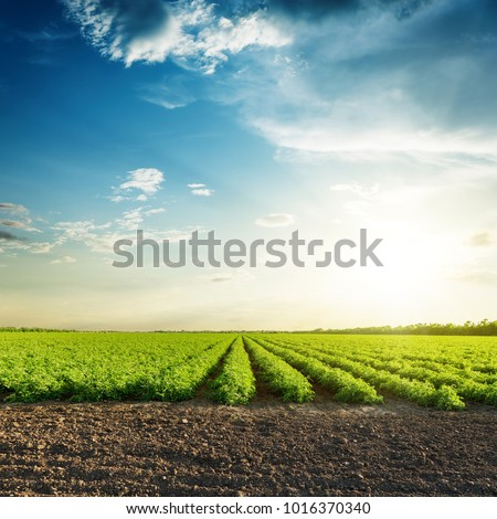green agriculture fields and sunset in blue sky with clouds #1016370340