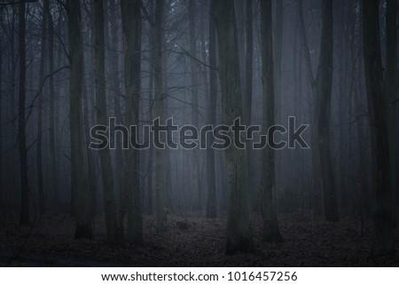 dark foggy forest in twilight