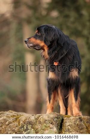 pretty portrait of dog  #1016468698