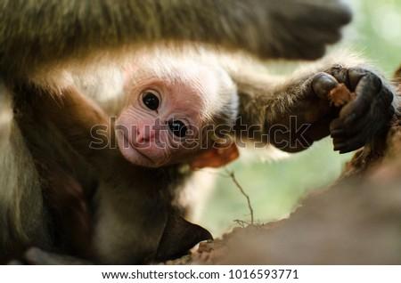 Portrait of baby Monkey #1016593771