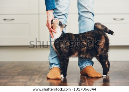 Domestic life with pet. Cat welcome his owner (young man) at home.   #1017066844