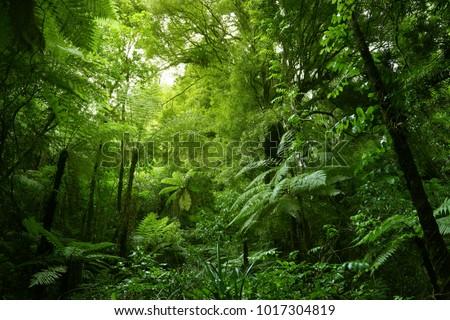 Green tree ferns in tropical jungle  #1017304819