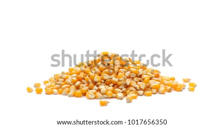 Yellow grain corn isolated on white background, for popcorn #1017656350