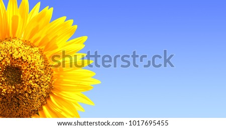 Sunflower on blue sky background. Copy space for your text #1017695455