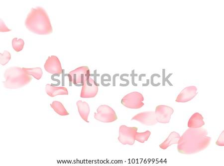 Pink sakura or rose falling petals