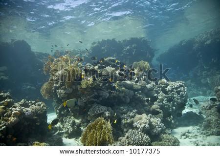 reeffish #10177375