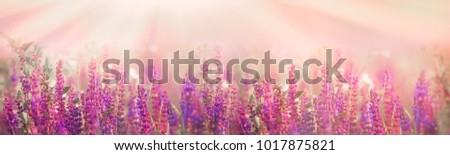 Selective and soft focus on purple flowers in meadow in spring - springtime #1017875821