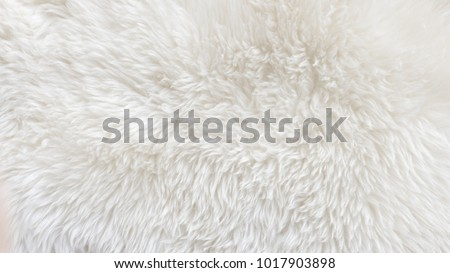 White wool with white top texture background, light natural sheep wool, white seamless cotton, texture of fluffy fur for designers, close-up fragment white wool carpet #1017903898