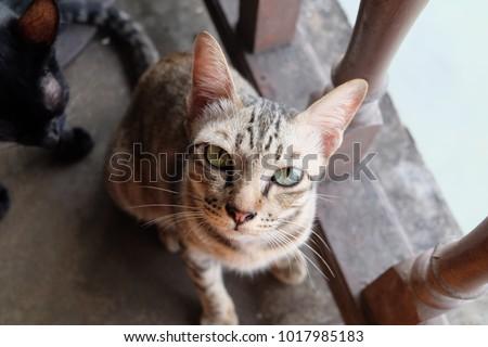 Cat Eyes Looking #1017985183