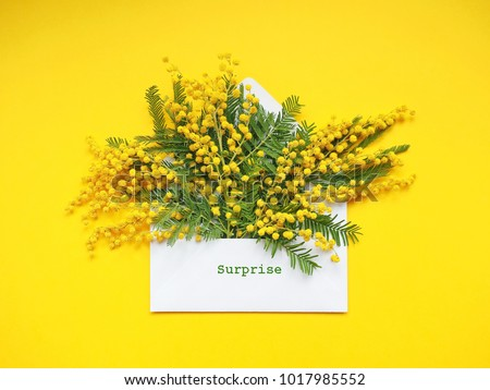 Brunches of beautiful Mimosa flower on yellow background #1017985552