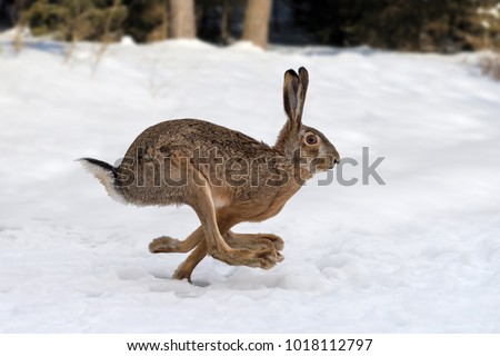 Hare running in the winter forest #1018112797