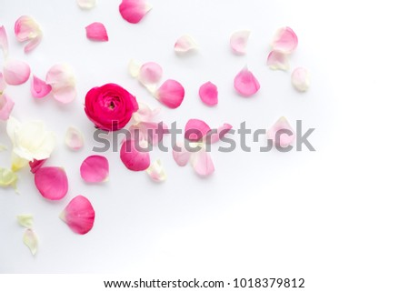Spring flowers. Pink flowers on white wooden background. Flat lay, top view #1018379812