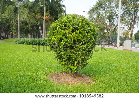 Nature art green tree with leaves background #1018549582