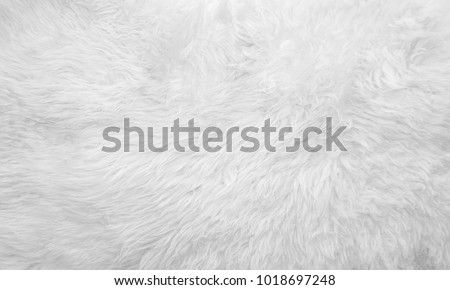 White soft wool texture background, seamless cotton wool, light natural sheep wool, close-up texture of white fluffy fur, wool with beige tone for designer #1018697248