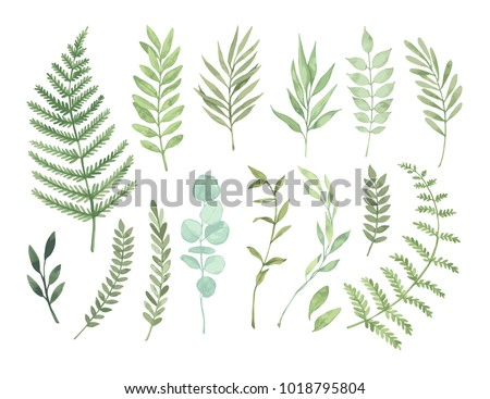 Vector watercolor illustrations. Botanical clipart. Set of Green leaves, herbs and branches. Floral Design elements. Perfect for wedding invitations, greeting cards, blogs, posters and more Royalty-Free Stock Photo #1018795804