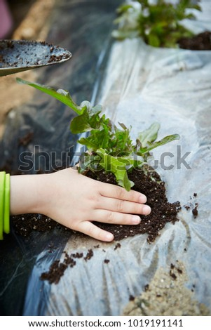 Planting vegetable crops #1019191141