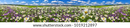 spring landscape panorama with flowering flowers on meadow. white chamomile and purple bluebells blossom on field. panoramic summer view of blooming wild flowers in meadow Royalty-Free Stock Photo #1019212897