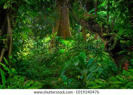 Asian tropical rainforest #1019240476