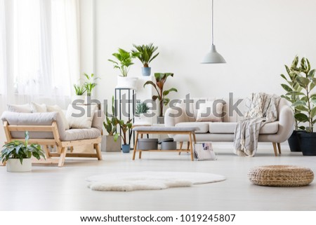 Pouf and white fur in spacious floral living room interior with wooden bench, beige sofas and plants #1019245807