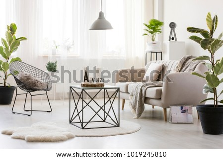 Black table on round rug between chair and beige settee in modern living room interior with ficus #1019245810