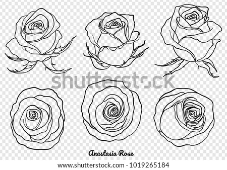 Rose vector set by hand drawing.Beautiful flower on white background.Rose art highly detailed in line art style.Anastasia rose for wallpaper.