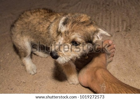 baby Newborn puppy dog smelling human man feet #1019272573