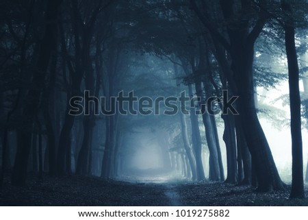 Smokey lane in the forest Royalty-Free Stock Photo #1019275882