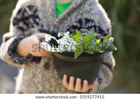 forest herbs in a hat held by a boy #1019277415