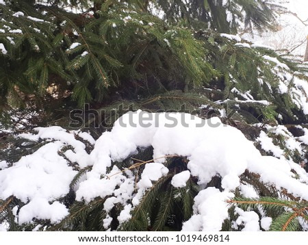 snow and ice on the branches #1019469814