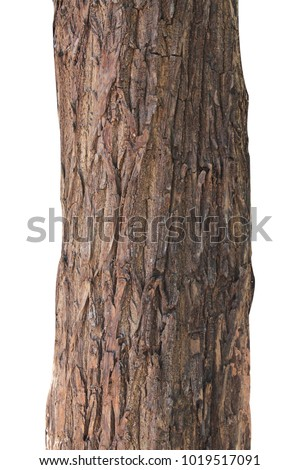 Tree trunk isolated on white background. #1019517091