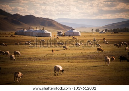 Color image of some Mongolian yurts on a field. #1019612002
