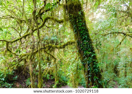 Moss on the tree in Ang Ka Luang Nature Trail is an educational nature trail inside a rainforest on the peak of Doi Inthanon National Park in Chiang Mai, Thailand. very popular for photographer #1020729118
