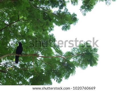 black crows on a tree #1020760669