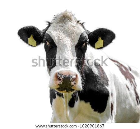 cow isolated on a white background #1020901867