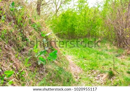 Beautiful young spring forest background with shortcut  #1020955117