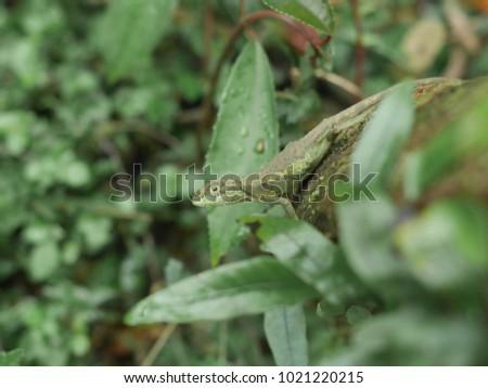 lizard hiding in the grass #1021220215