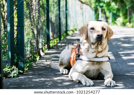 labrador sitting on the road with a mottled shadow background #1021254277